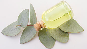 масло и листья эвкалипта