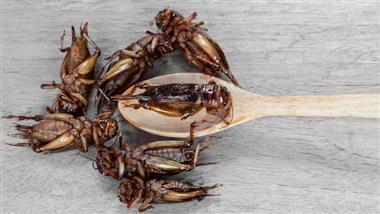 장 건강에 좋은 식용 귀뚜라미