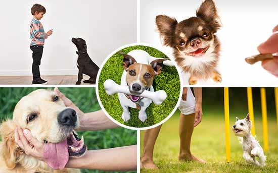 正强化宠物狗训练