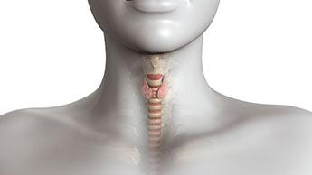 Carence en iode : signes, symptômes et solutions pour remédier au mauvais fonctionnement de la thyroïde