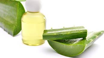 L'aloe vera pour traiter le psoriasis