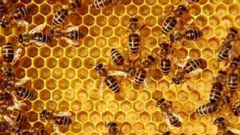 Co to jest pyłek pszczeli?