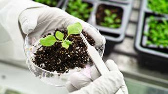 Gleba - GMO