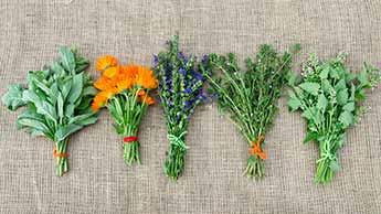 Czy zastanawiałeś się kiedyś, dlaczego homeopatia działa?