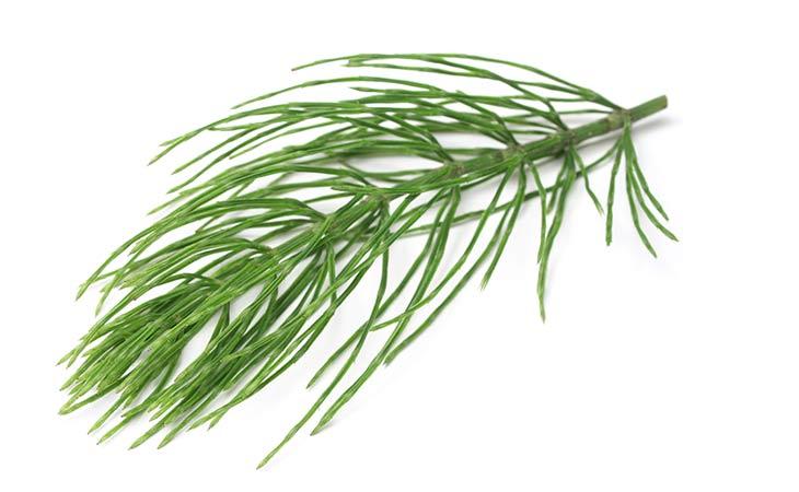 木贼草有助于改善您的皮肤和骨骼健康