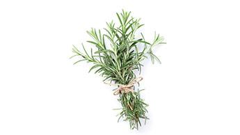 Le romarin : pourquoi est-ce une plante formidable ?