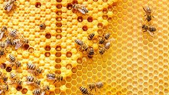 Was Sind Pollen?