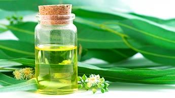 ユーカリ油と葉