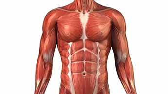 근육의 노화