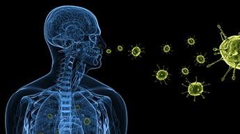 Cientistas Descobrem Ligação Direta entre o Cérebro e Sistema Imunológico