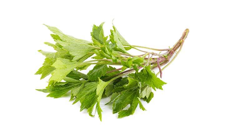 艾草:某些人视其为杂草,其他一些人则认为它是有益健康的草药