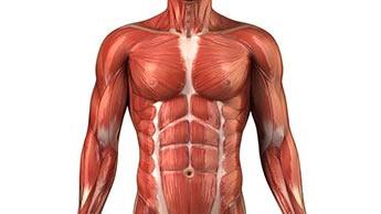 Comment Aider à Prévenir la Perte Musculaire Liée à l'âge