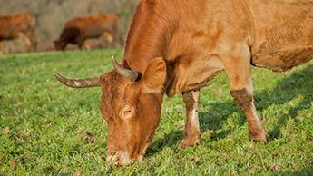 자연 방목 소