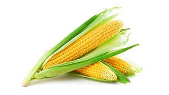 Fatos nutricionais do milho