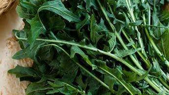 Folhas de Dente-de-leão
