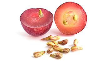 Was ist so toll an Traubenkernen?