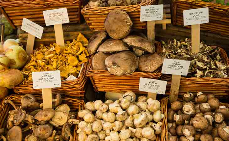 蘑菇和蘑菇提取物