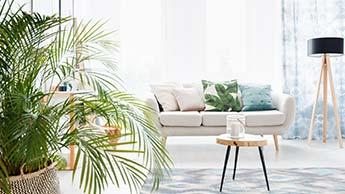 12 gesunde Zimmerpflanzen, die Ihre Raumluftqualität verbessern