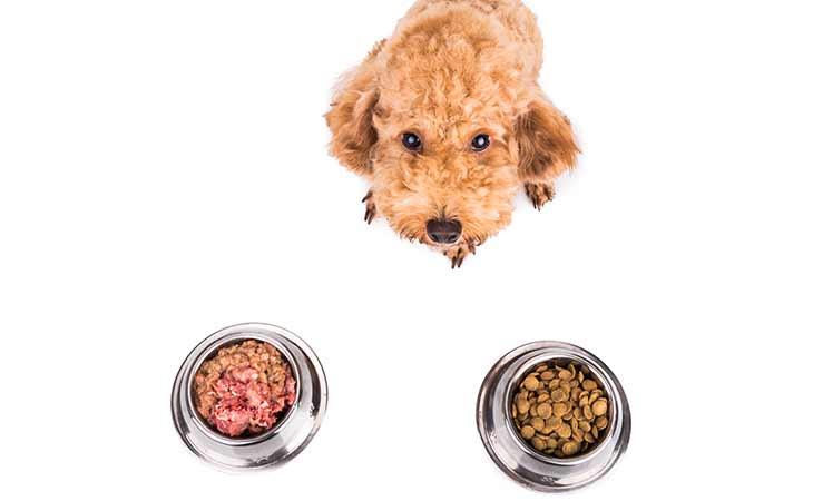 宠物、蛋白质、干粮和疾病