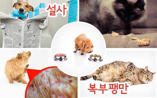 시중에서 판매되는 반려 동물용 사료 섭취에 따른 증상