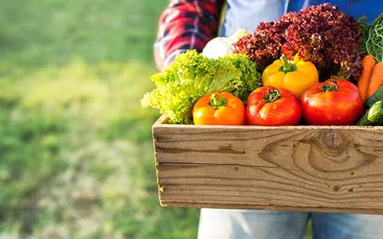 농장 채소