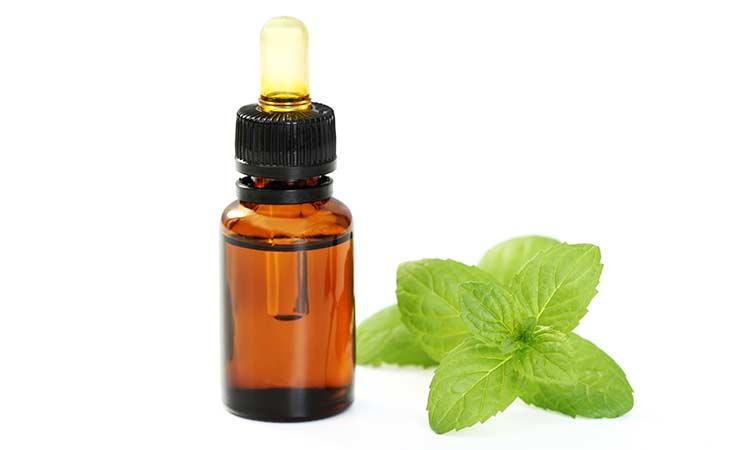 留兰香精油:一种更温和的薄荷油