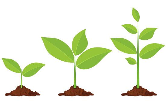Выращивание проростков