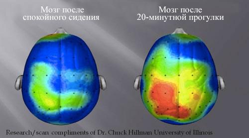 Вот что происходит с вашим телом, когда вы тренируетесь