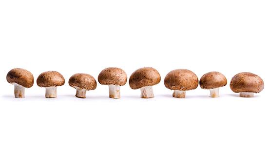 양송이 버섯