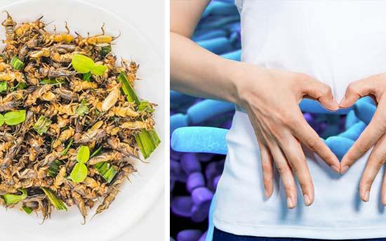 各种可食用的昆虫