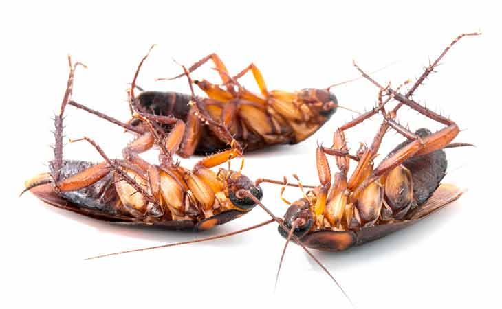 如何消除蟑螂