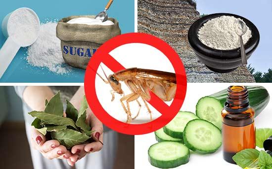 자연적으로 바퀴벌레를을 퇴치하는 방법