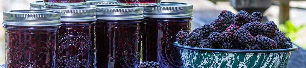 紫蓝莓食谱