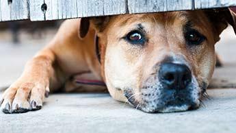 10 Comportements humains qui font stresser les chiens