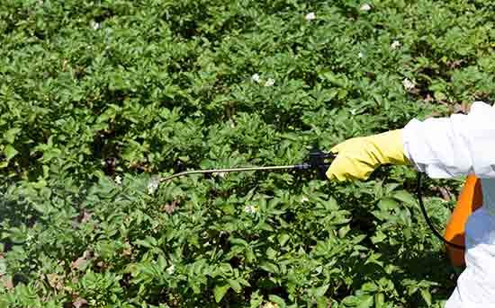 농약을 뿌린 농산물
