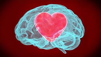 сердце внутри мозга