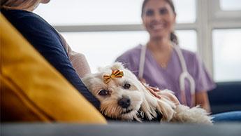 dono de animal de estimação conversando com o veterinário