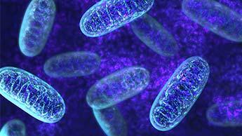 rede elétrica mitocondrial