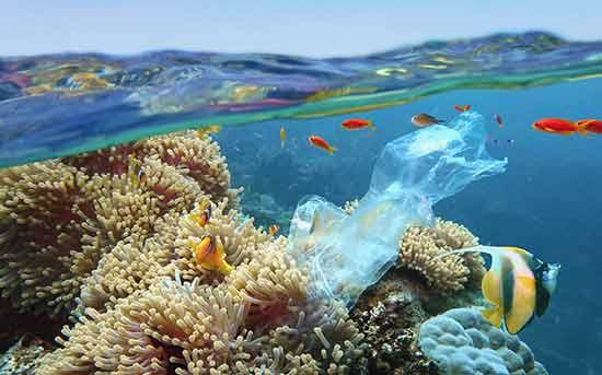 플라스틱 해양 오염