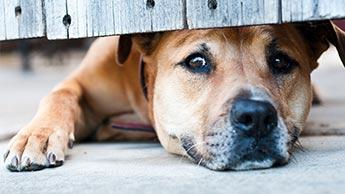 10 menschliche Verhaltensweisen, die Stress bei Hunden auslösen