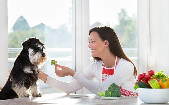 개한테 브로콜리를 주는 여자