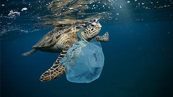 Schildkröte in Plastik gefangen