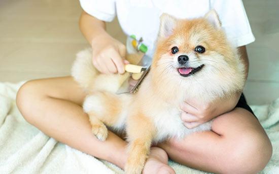 강아지 털 빗겨주기