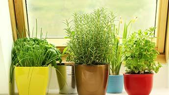 Planter et cultiver des herbes