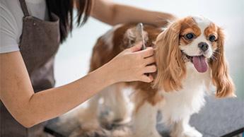 강아지 털 빗질하기