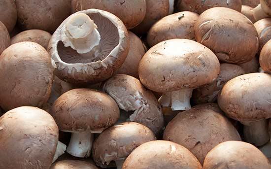 포타벨라 버섯
