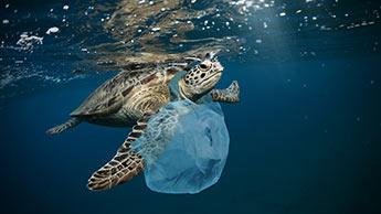 プラスチックにからまれたウミガメ