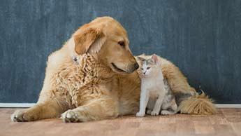 고양이와 개