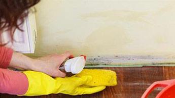 moisissures nettoyants antibactériens