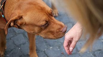 개가 정말로 악성 종양을 발견할 수 있을까요? 이 연구가 그 사실을 입증합니다